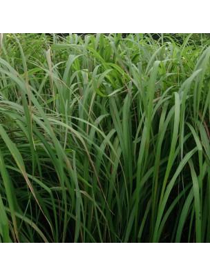 https://www.louis-herboristerie.com/23657-home_default/citronnelle-bio-huile-essentielle-de-cymbopogon-winterianus-10-ml-purasana.jpg