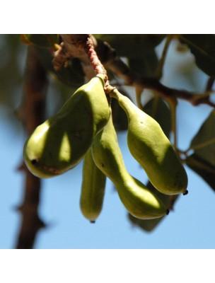 Caroubier Bio - Graines 100g - Tisane de Ceratonia siliqua L.