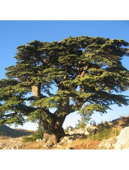 Cèdre du Liban Macérât de bourgeons Sans Alcool Bio - Peau 30 ml - Herbiolys