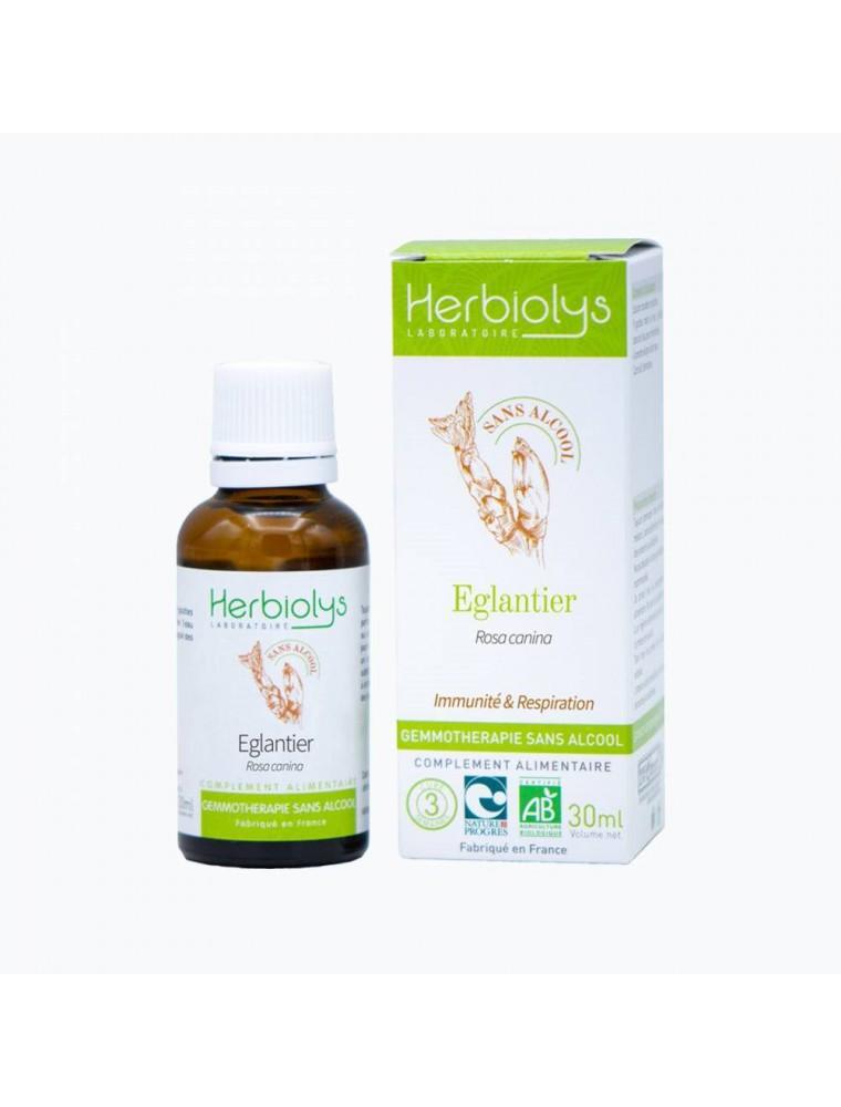 Églantier Macérât de jeunes pousses Sans Alcool Bio - Immunité et Respiration 30 ml - Herbiolys