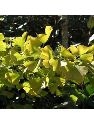 Ginkgo Macérât de bourgeons Sans Alcool Bio - Circulation 30 ml - Herbiolys