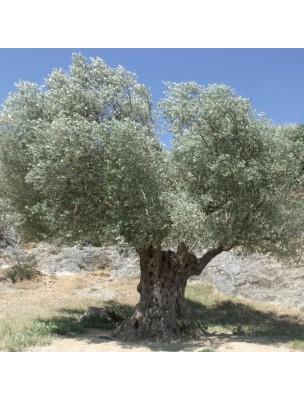 https://www.louis-herboristerie.com/24051-home_default/olivier-macerat-de-jeunes-pousses-fraiches-sans-alcool-bio-cardio-vasculaire-et-circulation-30-ml-herbiolys.jpg