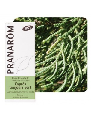 Cyprès de Provence (Cyprès toujours vert) Bio – Cupressus sempervirens 5 ml - Pranarôm