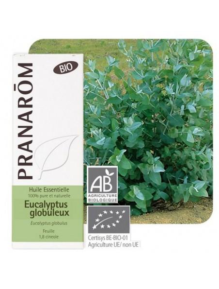Eucalyptus globuleux Bio - Huile essentielle d'Eucalyptus globulus 10 ml - Pranarôm