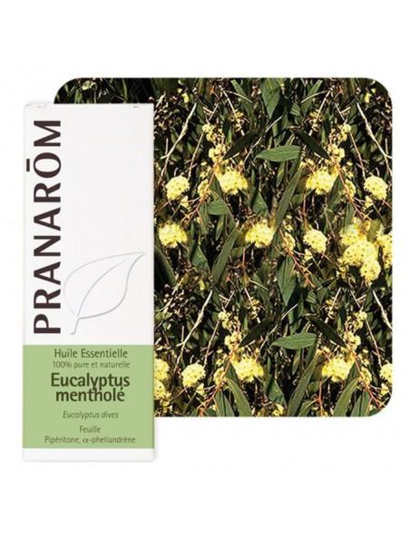 Eucalyptus mentholé - Huile essentielle Eucalyptus dives 10 ml - Pranarôm