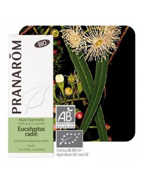Eucalyptus radié Bio - Huile essentielle Eucalyptus radiata 10 ml - Pranarôm
