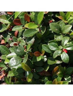 https://www.louis-herboristerie.com/24786-home_default/gaulthrie-couche-huile-essentielle-pranarm-10-ml.jpg