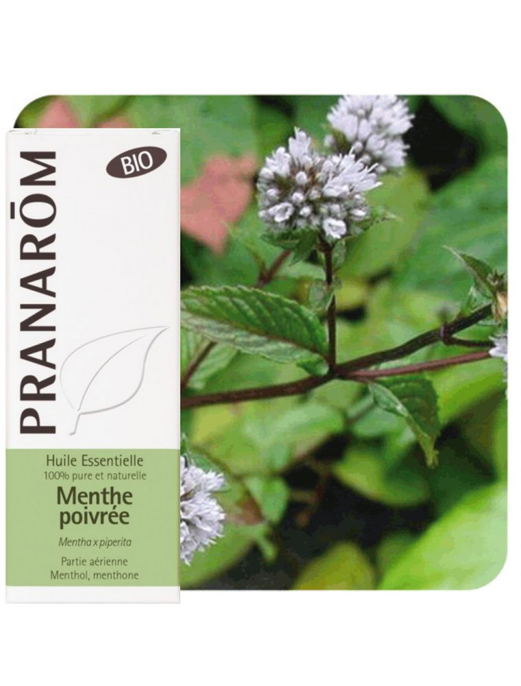 Menthe poivrée Bio - Huile essentielle Mentha piperita 10 ml - Pranarôm