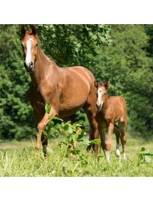 High Horse Medicated - Shampooing Chevaux 500ml - Hilton Herbs