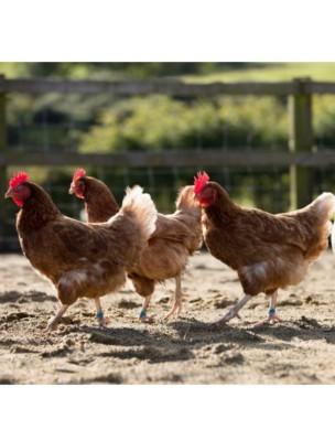 https://www.louis-herboristerie.com/24917-home_default/daily-hen-health-complement-quotidien-pour-poules-et-oiseaux-500ml-hilton-herbs.jpg