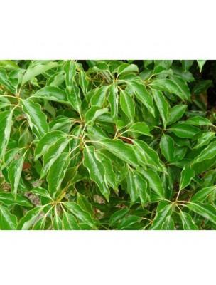 https://www.louis-herboristerie.com/24924-home_default/ravintsara-bio-huile-essentielle-de-cinnamomum-camphora-cineol-10-ml-herbes-et-traditions.jpg