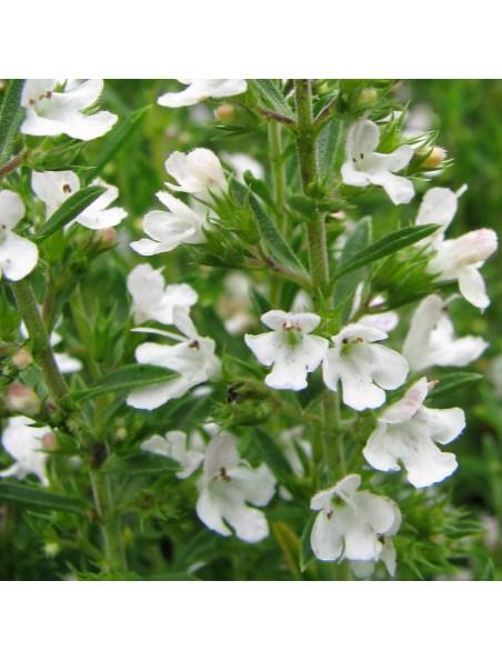 Sarriette des montagnes Bio - Huile essentielle de Satureja montana 5 ml - Herbes et Traditions