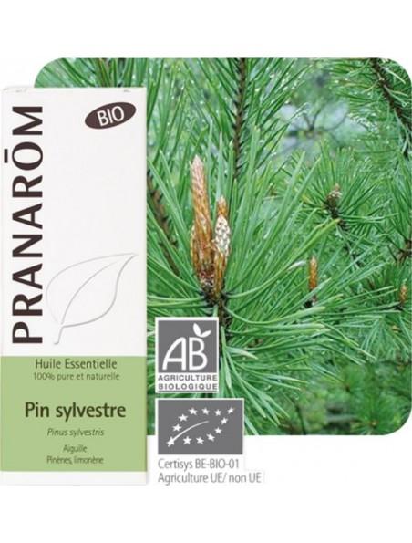 Pin sylvestre Bio - Huile essentielle Pinus sylvestris 10 ml - Pranarôm