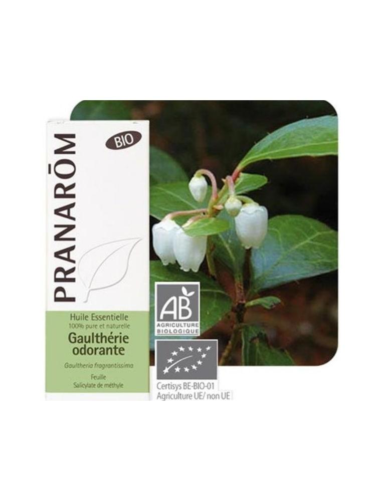 Gaulthérie odorante Bio -  Huile essentielle Gaultheria fragrantissima 10 ml - Pranarôm