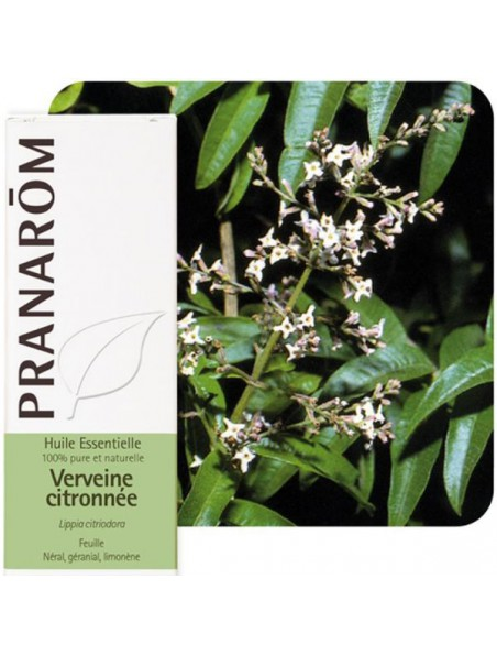 Verveine citronnée (odorante) - Lippia citriodora 5 ml - Pranarôm
