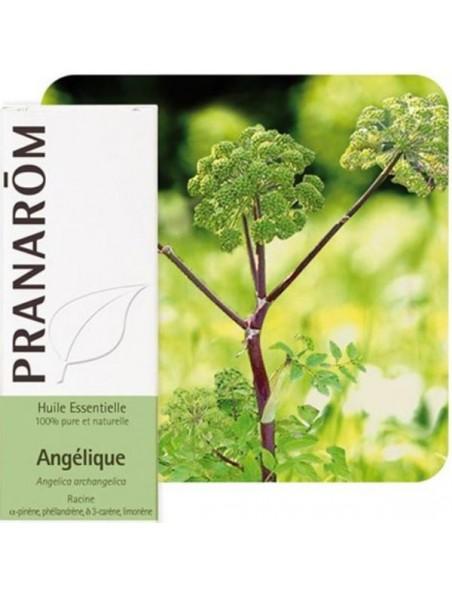 Angélique - Huile essentielle d'Angelica archangelica 5 ml - Pranarôm