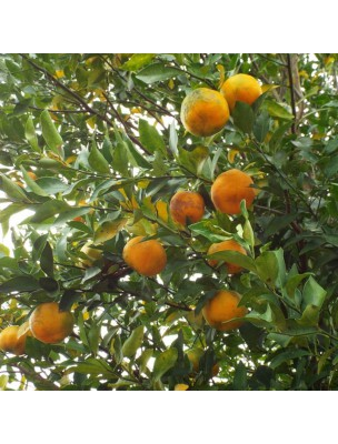 https://www.louis-herboristerie.com/25277-home_default/bergamote-bio-huile-essentielle-de-citrus-bergamia-10-ml-herbes-et-traditions.jpg