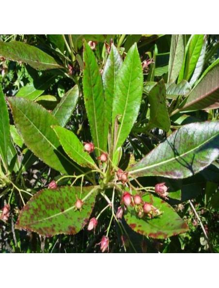 Bois de rose Bio - Huile essentielle de Aniba Parviflora5 ml - Herbes et Traditions