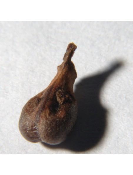Pépins de Raisin - Poudre 100g - Vitis vinifera