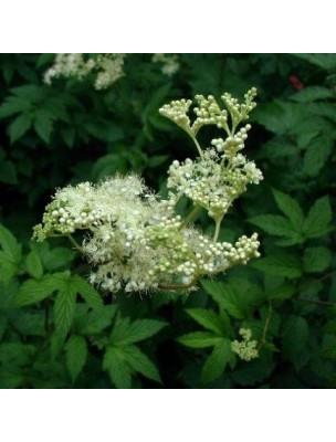 https://www.louis-herboristerie.com/25777-home_default/reine-des-pres-fleurs-100g-tisane-de-spiraea-ulmaria-l.jpg
