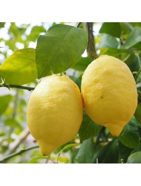 Citron Bio - Ecorce de fruit poudre 100g - Tisane de Citrus limonum