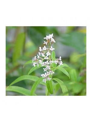 https://www.louis-herboristerie.com/25804-home_default/verveine-citronne-odorante-huile-essentielle-pranarm-5-ml.jpg