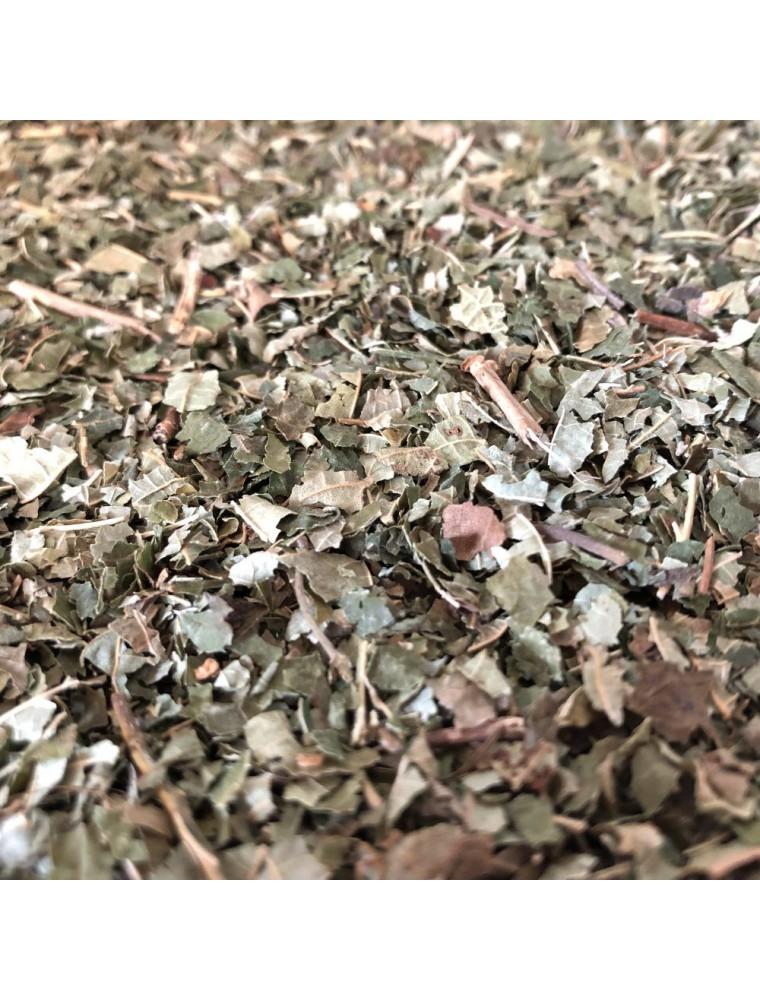 Noisetier - Feuilles coupées 100g - Tisane de Corylus avellana