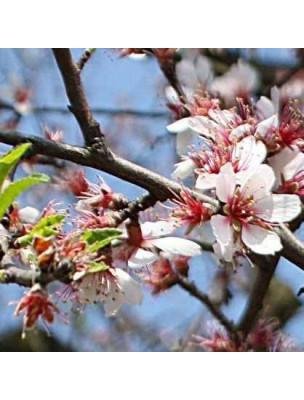 Amande douce Bio - Huile végétale Prunus amygdalus 50 ml - Pranarôm