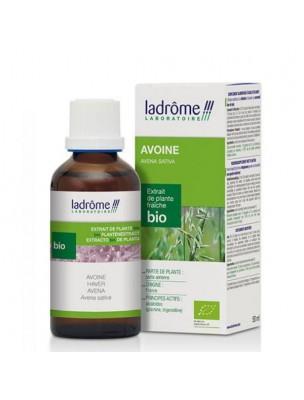Avoine Bio - Tonus & Vitalité Teinture-mère Avena sativa 50 ml - Ladrôme