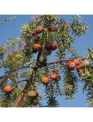 Cade Bio - Huile essentielle de Juniperus oxycedrus 10 ml - Herbes et Traditions