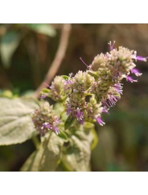 https://www.louis-herboristerie.com/26548-home_default/patchouli-huile-essentielle-de-pogostemon-cablin-5-ml-pranarom.jpg