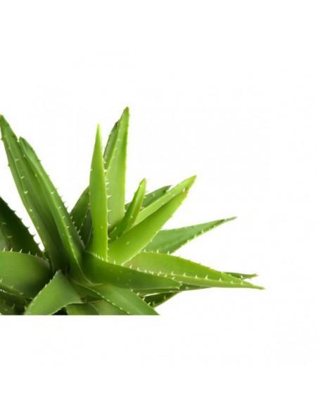 Aloe vera Bio - Gel réparateur et hydratant parfumé 200 ml - Purasana
