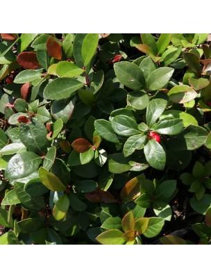 Gaulthérie odorante Bio -  Huile essentielle Gaultheria fragrantissima 30 ml - Pranarôm