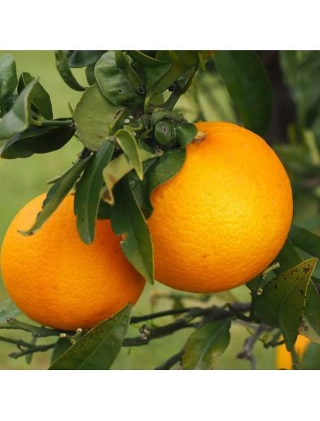 Orange douce Bio - Huile essentielle Citrus sinensis 30 ml - Pranarôm