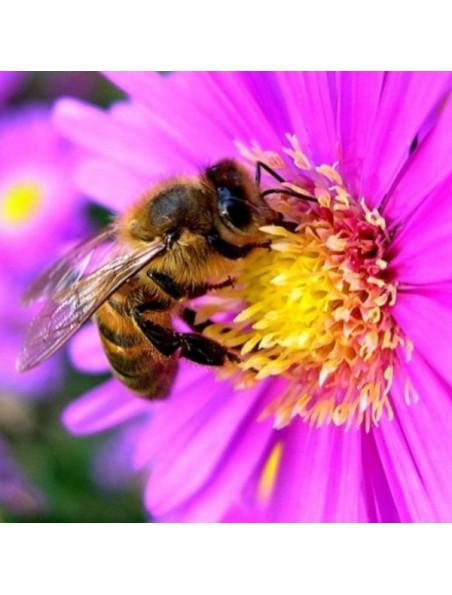Miel d'Acacia Bio 500g - Doux et raffiné - Ballot-Flurin