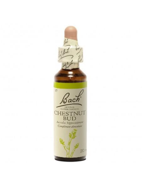 Chestnut Bud (Marronnier) N° 7 - Répétition des mêmes erreurs 20 ml - Fleurs de Bach Original