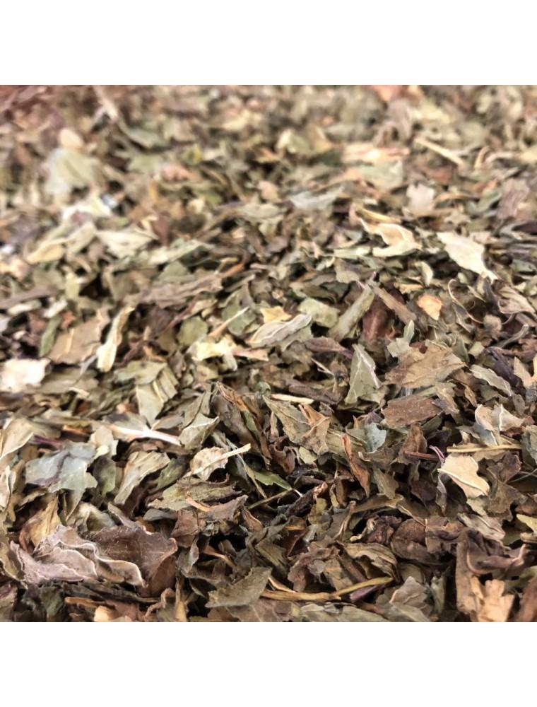 Menthe poivrée Bio - Feuilles entières 100g - Tisane de Mentha piperita L.