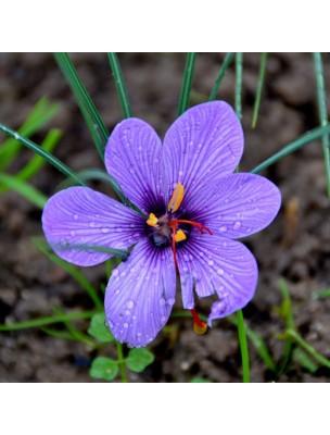 https://www.louis-herboristerie.com/28063-home_default/safran-bio-digestion-et-stress-teinture-mere-de-crocus-sativus-50-ml-herbiolys.jpg