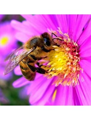 https://www.louis-herboristerie.com/28231-home_default/miel-de-lavande-bio-miel-finement-cristallise-aux-vertus-millenaires-480g-ballot-flurin.jpg
