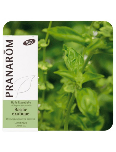 Basilic Exotique Bio - Huile essentielle d'Ocimum basilicum ct linalol 10 ml - Pranarôm