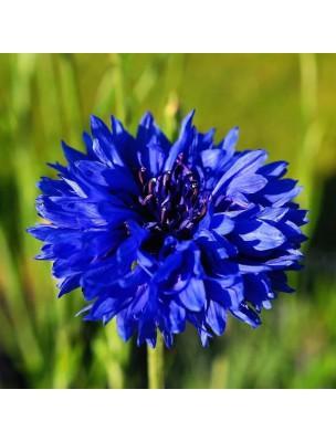 https://www.louis-herboristerie.com/28615-home_default/bleuet-bio-hydrolat-de-centaurea-cyanus-200-ml-herbes-et-traditions.jpg
