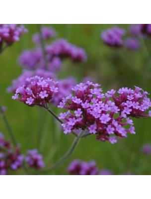 Verveine Bio - Hydrolat de Lippia citriodora Kuntze 200 ml - Herbes et Traditions
