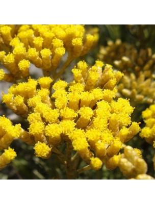 https://www.louis-herboristerie.com/28933-home_default/helichryse-italienne-bio-hydrolat-de-helichrysum-italicum-200-ml-herbes-et-traditions.jpg