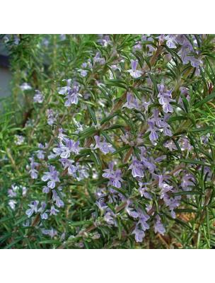 https://www.louis-herboristerie.com/29246-home_default/romarin-a-verbenone-bio-huile-essentielle-rosmarinus-officinalis-verbenone-5-ml-herbes-et-traditions.jpg