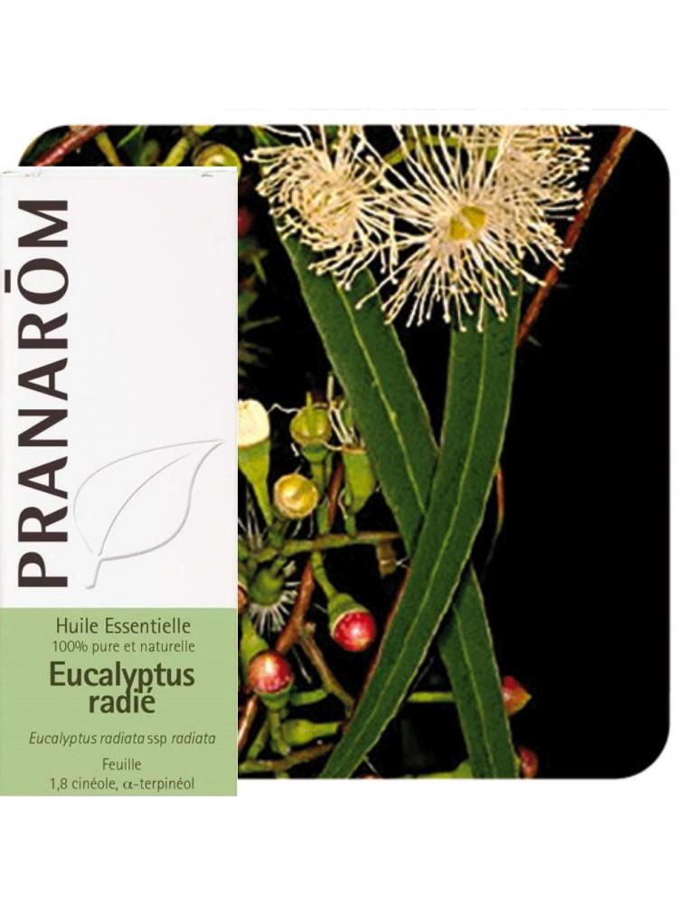 Eucalyptus radié - Huile essentielle Eucalyptus radiata 10 ml - Pranarôm