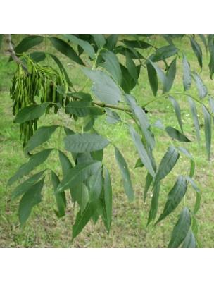 https://www.louis-herboristerie.com/29837-home_default/frene-ecorce-coupee-100g-tisane-de-fraxinus-excelsior.jpg