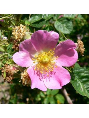 Contour des Yeux lissant à la Rose musquée - Premières rides 10 ml - Weleda