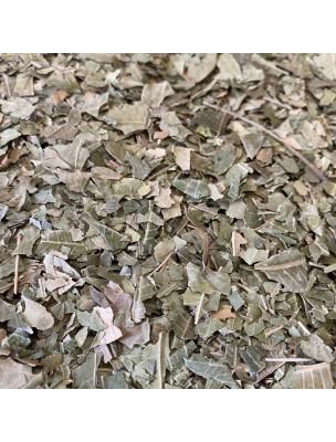 Margousier (Neem) - Feuilles coupées 100g - Tisane d'Azadirachta indica