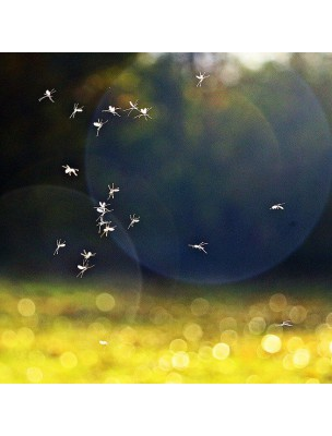 Pranabb Roller Anti-Moustiques Bio et Pranabb Roller après-piqûres Bio - Anti-moustiques - Pranarôm