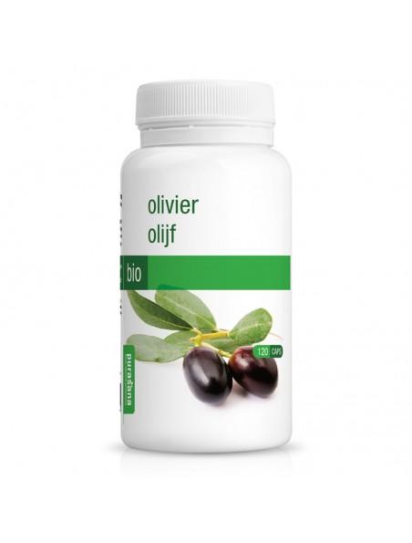 Olivier Bio - Circulation 120 gélules - Purasana